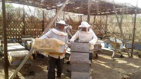 الزراعة: قاعدة بيانات للعاملين في صناعة العسل ودورات تدريبية لهم