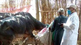 """تحصين 181 ألف رأس ماشية ضد حمى الوادي المتصدع و""""القلاعية"""""""