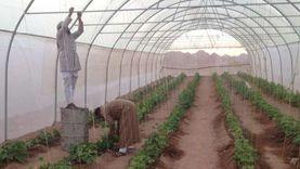 زراعة 5 أفدنة بأشجار الزينة والمثمرة بمدينة الخارجة بتمويل من «البيئة»