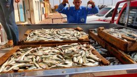 توزيع 10 أطنان من أسماك الشنشلا على 7 منافذ بجنوب سيناء.. سعر الكيلو 4 جنيهات