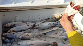 الغرف التجارية: تراجع أسعار السمك والحبوب والبقول مقارنة بفبراير 2020