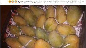 الزراعة: اقتربنا من فتح السوق الأمريكية أمام المانجو المصرية