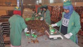 """""""تصديري الغذاء"""" يرفع توصيات لمضاعفة صادرات التمور خلال أيام"""