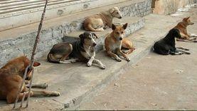 حملات موسعة للقضاء على الكلاب الضالة في الغربية