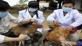 السلطات الصينية تعلن تفشي «إنفلونزا الطيور» شمال شرقي البلاد