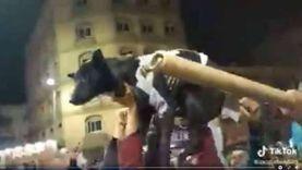 """غضب على السوشيال ميديا بالأقصر بسبب تسمية كلب """"شيكابالا"""""""