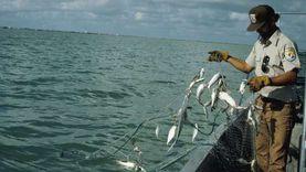 صيد السمك.. 455 كيلو مترا من السواحل الغنية بالأسماك في مطروح