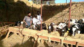بيطري الشرقية: تحصين 317 ألف رأس ماشية للوقاية من الحمي القلاعية