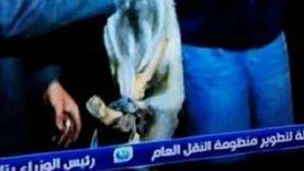 """ريهام سعيد تهاجم المعترضين على حلقة الثعالب: """"بتعملوا إيه على صفحتي؟!"""""""