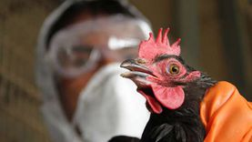 7 نصائح لمربي الثروة الحيوانية والداجنة لمجابهة الظروف الجوية الطارئة