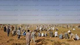 240 ألف فدان قابل للزراعة في الساحل الشمالي