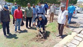 زراعة ألف شجرة زيتون بالحدائق العامة المجانية في كفر الشيخ