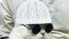 """""""مرشدكم قطة"""".. مراحل وصول الإخواني لمرحلة الطاعة العمياء"""