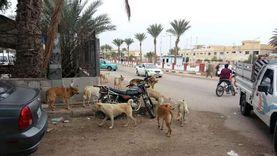 الفاو: داء الكلب يقتل 95 ألف شخص سنويا.. والزراعة: عقر 1.3 مليون إنسان
