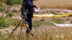 «زراعة الإسكندرية»: بدء توريد القمح إلى الصوامع الثلاثاء المقبل
