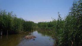 بعد استجابة الزراعة.. مستأجرو المزارع السمكية بدمياط: «المهم التنفيذ»
