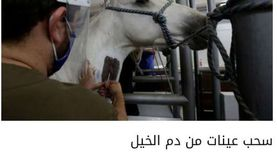 استشاري طب وقائي: باحثون يتوصلون للقاح كورونا من دم الخيول