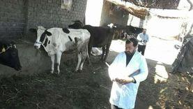 تحصين 5.5 مليون رأس ماشية ضد الحمى القلاعية والوادي المتصدع في 2020