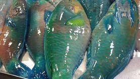 الثروة السمكية: مشروع «الفيروز» كبير ويكفي للسوق المحلية والتصدير