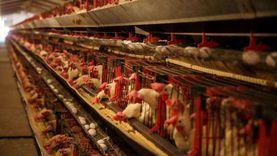استمرار ارتفاع أسعار اللحوم والبيض للشهر الثالث على التوالي