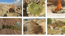 إبادة 85 مزرعة نباتات مخدرة بجنوب سيناء