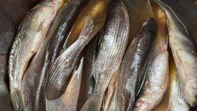 ضبط أسماك مملحة ولحوم فاسدة في المنيا