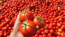الغرف التجارية: فاصل العروات يرفع سعر الطماطم 10 قروش للكيلو