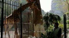جولة داخل حديقة الحيوان مع تطبيق الإغلاق بسبب كورونا