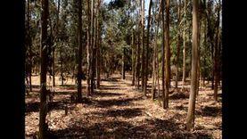 مجلة أمريكية: تجربة مصر في زراعة الغابات الشجرية يحتذى بها