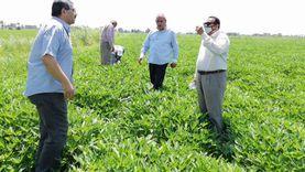 """صور.. وكيل """"زراعة دمياط"""" يتفقد محاصيل الأرز والبطاطا"""