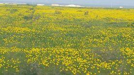 زراعة 900 فدان لتنمية المراعي والحفاظ على الطبيعة في مطروح