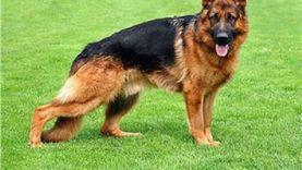 البحث عن كلب مسعور في الإسكندرية عقر 37 مواطنا
