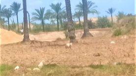 بعد ظهور حيوان غريب.. بيطري الدقهلية يقاوم الكلاب الضالة بقرية «زيان»
