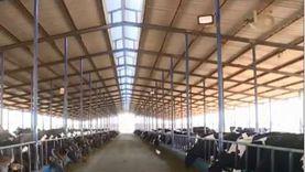 مشروع البتلو.. عودة القرية المنتجة وتحسين دخل الأسر الريفية (فيديو)