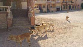 «الطب البيطري» ترصد 14 كلبا في واقعة سفاجا: إخصاء الذكور وتعقيم الإناث
