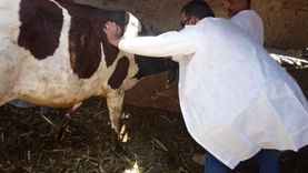 تحصين 2 مليون رأس ماشية ضد الحمى القلاعية والوادي المتصدع في شهر واحد