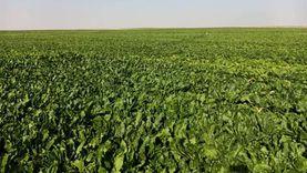 ضبط 38 طن تقاوي أرز مغشوشة ومحطتي غربلة غير مرخصة بكفر الشيخ والغربية
