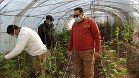 وكيل زراعة دمياط يتفقد مشروع الصوب الزراعية بالمديرية.. ويوجه بتوصيات