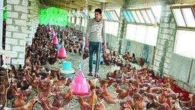 قطاع الثروة الحيوانية والداجنة : لم نصل إلى الاكتفاء الذاتي من الدواجن
