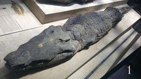 متحف شرم الشيخ يفاضل بين قطعتين أثريتين للعرض خلال أغسطس