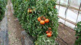 شعبة الخضر والفواكهة: تراجع الأسعار من 20 إلى 30% خلال العيد