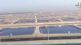 من القناة إلى بورسعيد.. مشاريع الاستزراع السمكي مصدر دخل قومي