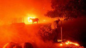 حرائق الغابات تشتد في كاليفورنيا وتجبر الأمريكيين على إخلاء منازلهم