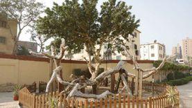 8 خطوات لتطوير مزار شجرة مريم بالمطرية.. ضمن مسار العائلة المقدسة