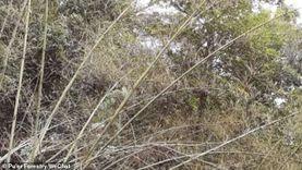 خطوط دفاعية على الحدود لصد أسراب الجراد.. «تقرير»