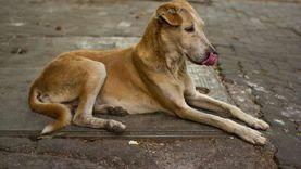 تأجيل دعوى استخدام سم الاستركينين في قتل الكلاب الضالة لـ18 فبراير