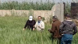 تأجيل توريد محصول القمح بالإسكندرية بسبب الأحوال الجوية لـ 20 إبريل