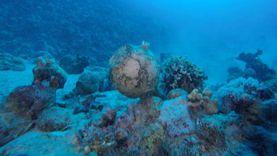 بعثة «آداب الإسكندرية» تعثر على سفينة غارفة بالبحر الأحمر تعود للقرن 18