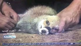 الخدمات البيطرية عن حلقة ريهام سعيد لصيد الحيوانات: بشعة ومخالفة