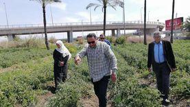 وكيل زراعة دمياط يتابع محصول الطماطم: معدلات الإنتاج عالية